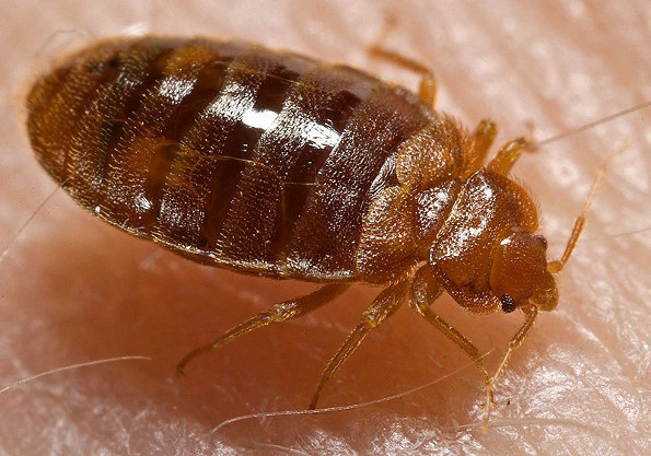bed-bugs-treatment-durham-region
